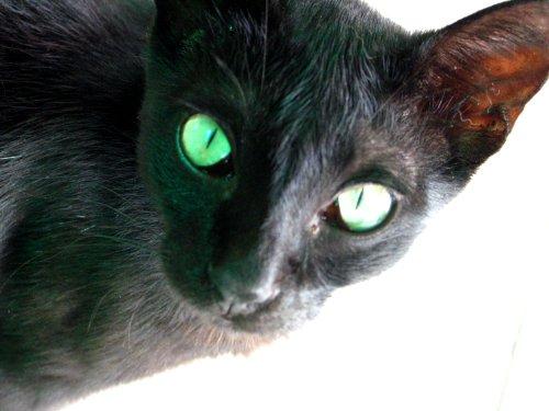 blackcatbetong.jpg