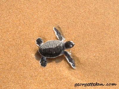turtle01.jpg