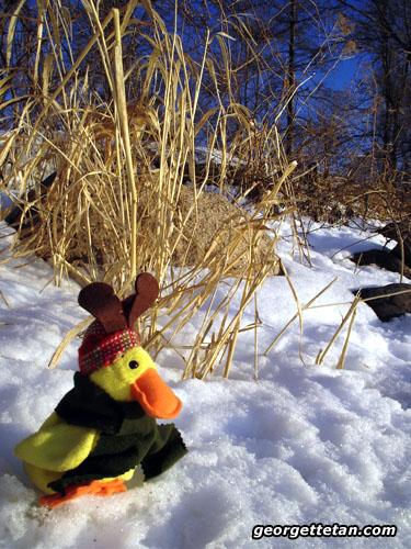snow_ducky