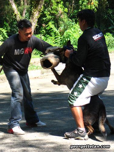 sdogs2