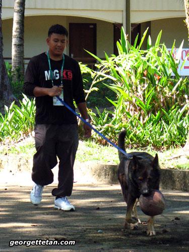 sdogs3