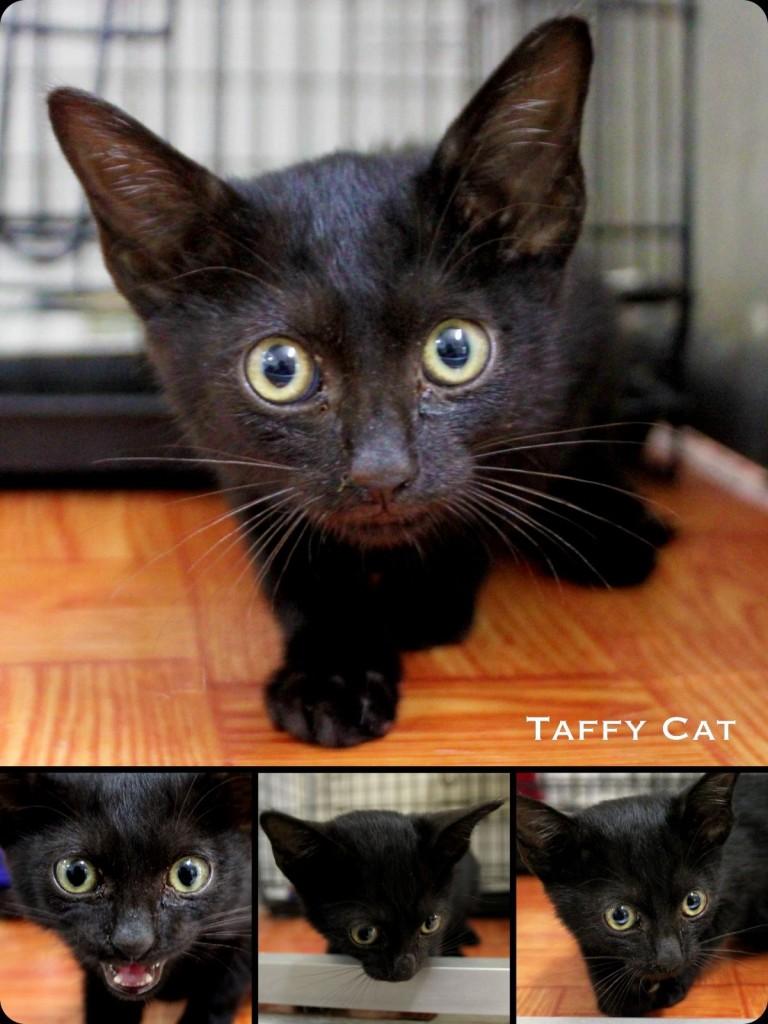 taffy2