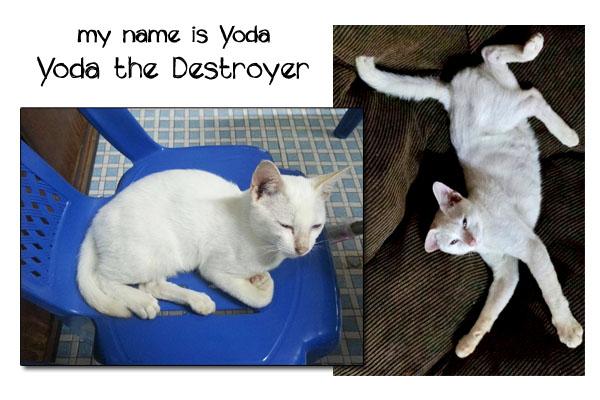 Yoda the Destroyer